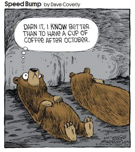 Name:  Bears nct_1579236904907.jpg Views: 90 Size:  56.0 KB