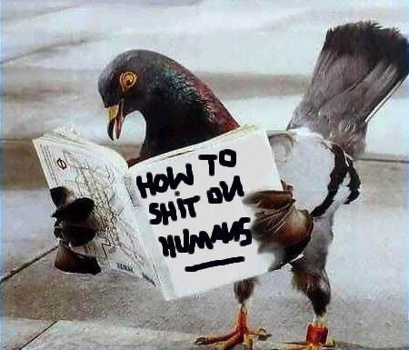 bird shit.jpg