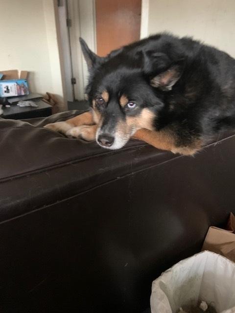 blue eyed dog.jpg