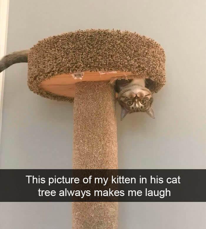 cat cat tree.jpg
