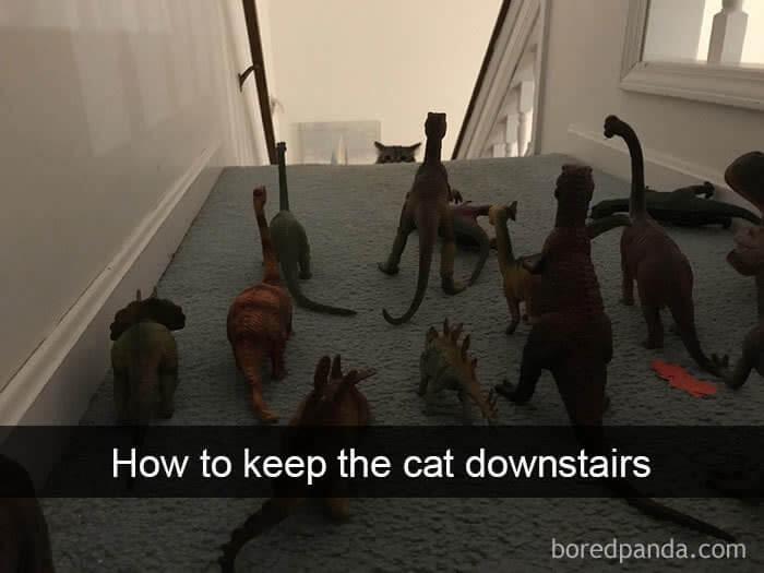 cat dinasaurs.jpg