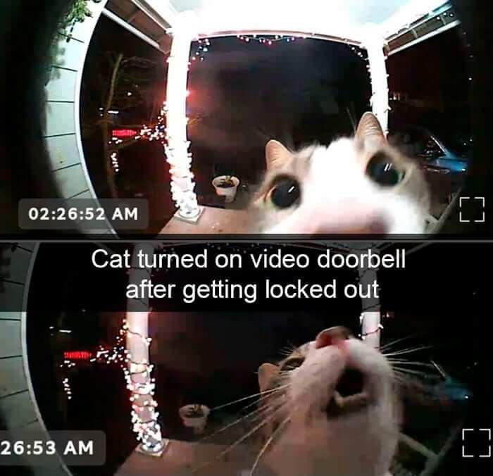cat doorbell.jpg