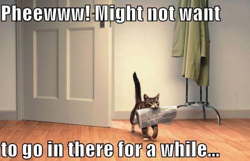 Name:  cat.jpg Views: 40 Size:  28.7 KB