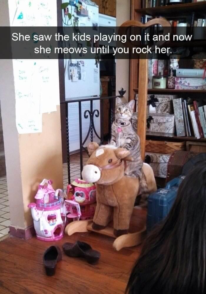 cat rocker.jpg