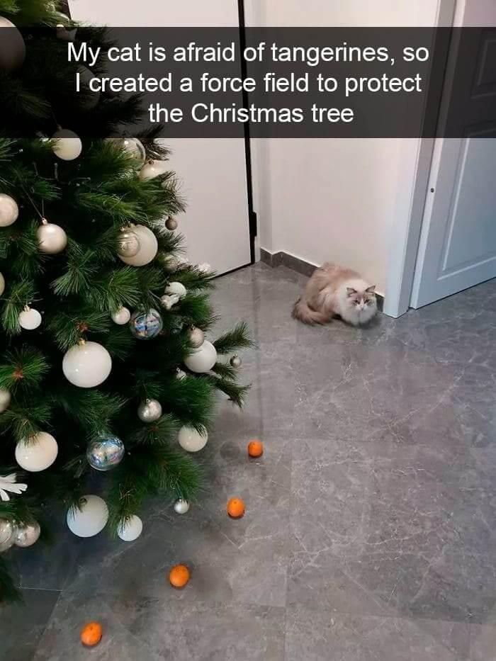 cat tangerines.jpg