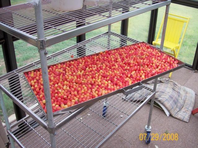 Name:  Sloppy Joe's Red Tater Salad, Culiflower Baked.jpg Views: 62 Size:  108.7 KB