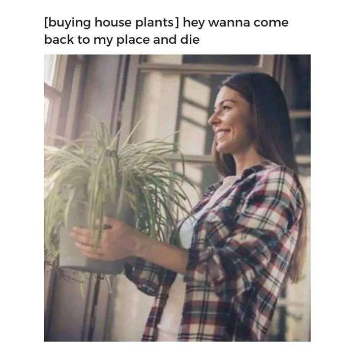 Name:  Funnyplants_1580648377349.jpg Views: 31 Size:  51.5 KB
