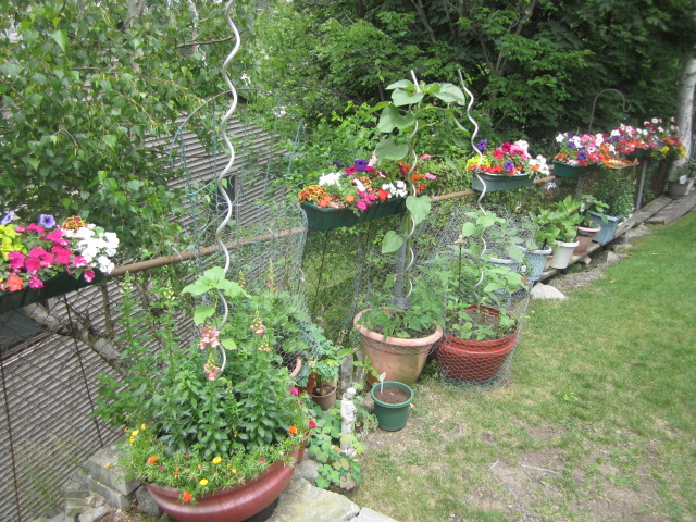 Name:  Half my garden.JPG Views: 233 Size:  199.2 KB