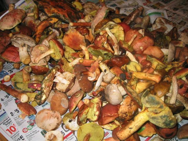 Mushrooms Aug 2008.JPG