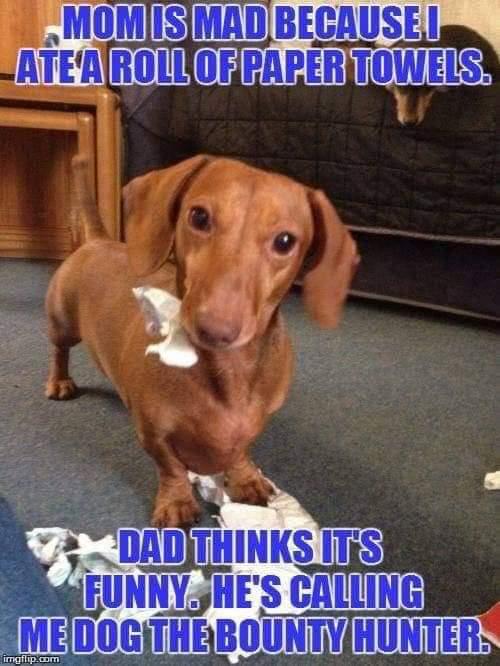 Name:  Pets_1556648604837.jpg Views: 38 Size:  49.6 KB