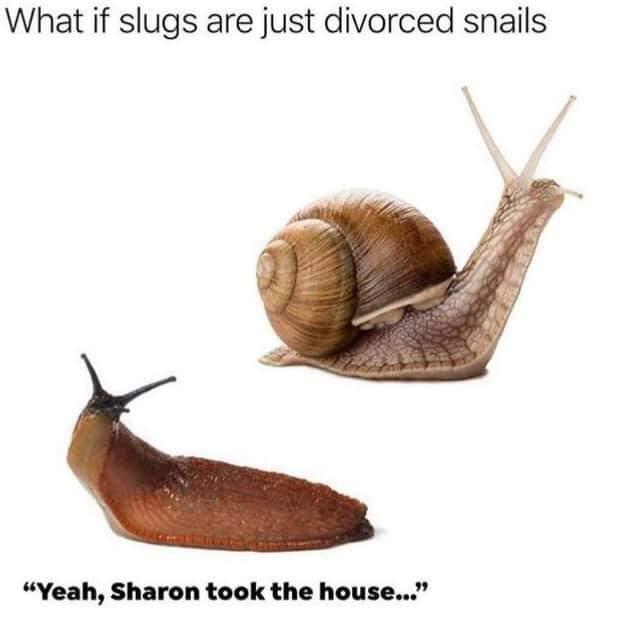 Slugs_1627335419461.jpg