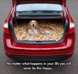 Dog bones Pets20191220_221332.jpg